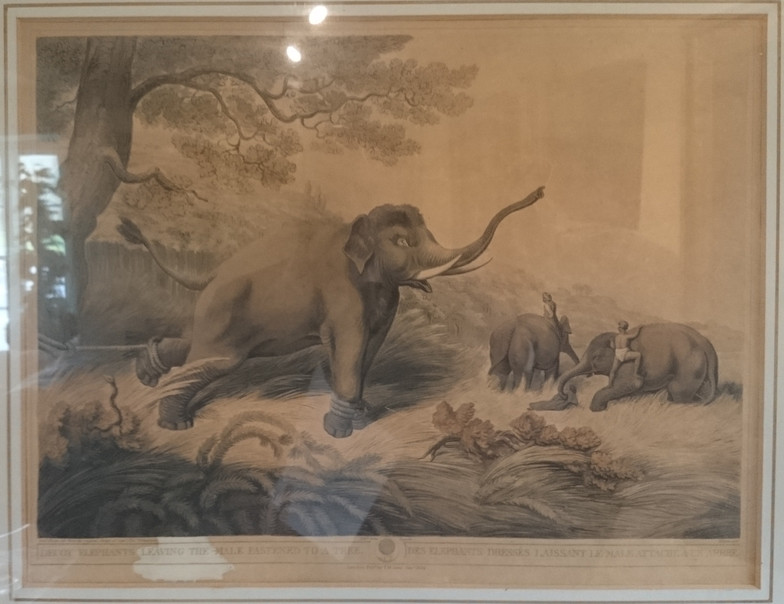 antique paintings and prints hares antiques